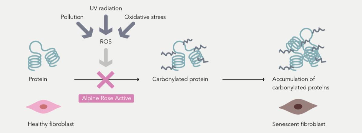 Carbonilazione delle proteine